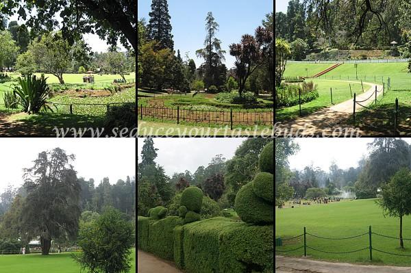 ooty garden 00