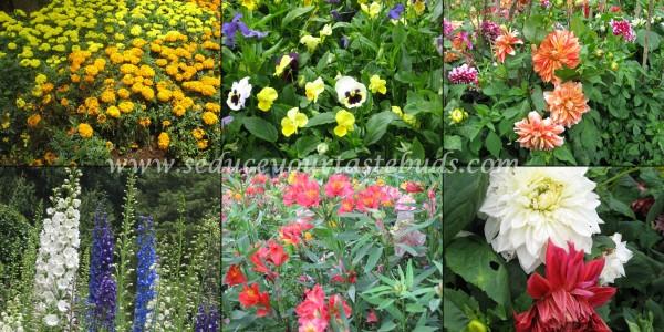 ooty garden 0